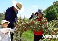 보리수 열매 따기 체험