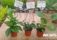 aT, 미세먼지 절감효과 아이비 등 관엽식물 추천