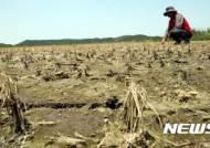 """""""가뭄피해 농가 쌀 변동직불금 지급해야"""" 정부 건의"""