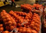 비사업용 화물차로 가락시장에 농산물 운송…1억대 챙겨
