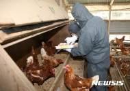 광주·전남 산란계 농장 78% 친환경인증···농약잔류 검사 '주목'