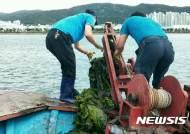 [울산소식]남구, 태화강 바지락어장서 파래 제거작업 등