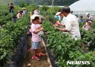 [용인소식]학일마을, 농림부 '창조적 마을 공모' 선정 등