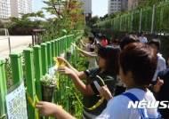 [광주소식]광산구 주민 공동체 활동 다채 등