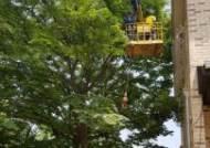 강서구, 소규모 공동주택내 위험한 나무들 정비