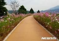 경남 하동, 29일 배드리공원에서 '코스모스·호박축제' 개최