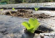 '농가소득 올려라'···영주시, 3모작 재배법 육성 착수