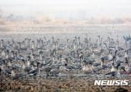철새 시즌 도래…환경부 AI 예찰활동 강화
