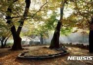 경북도, '남산둘레길' 등 가을에 걷기 좋은 길 5곳 선정