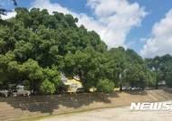 녹나무 아름다운 순천공고 학교숲