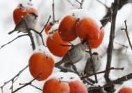 22일 강원도 낮 기온 회복...영서지역 밤부터 '눈'