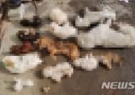 익산 유기견보호센터에서 100여마리 개 사체 발견