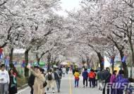 제천 청풍호벚꽃축제 4월13~15일 개최