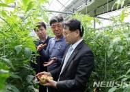 부산농협, 대저토마토 현장 간담회…소비촉진 앞장