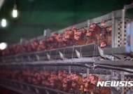 동물복지 축사 모델 개발 시동…AI·살충제 계란 파동 넘는다