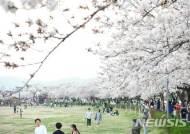 천년고도 경주, 6일부터 10일간 경주벚꽃축제 열려