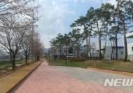 [증평소식]왕벚나무 가로수길 산책 명소로 조성 등