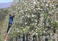 '사과 농사 풍년을 기원하며'