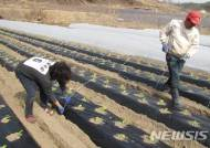 영주시, 3모작 채소재배 기술보급 나서…농가소득 향상 기대