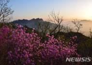 도봉산 진달래 군락지의 새벽