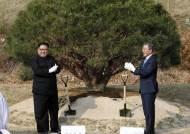 [종합]남북정상, '1953년생 평화 소나무' 합토합수