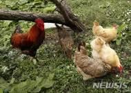 [원추 오늘의운세]닭띠, 꼬끼오 외치고 싶은 하루