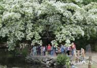 주말, 전북은 맑고 쾌청…'나들이 무난'