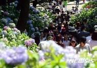 태종대 '제13회 수국 꽃 문화축제' 30일 개최