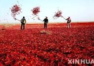 中, 추분을 '농민풍작날'로 지정…올해는 9월 23일
