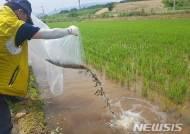 경북토속어류센터, 미꾸리가 사는 '친환경 논' 시범운영