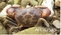 갯벌 청소부 '갯게' 8월 보호해양생물