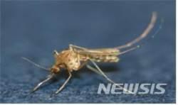 경산서 일본뇌염 매개체 '작은빨간집모기' 올해 첫 발견