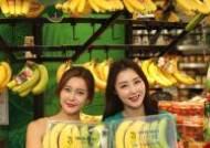 초록색부터 노란색까지 '하루하나 바나나'