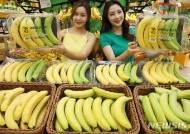 초록색부터 노란색까지, '하루하나 바나나하세