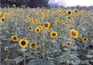 울산시, 태화강 국가정원 연내 지정 만전
