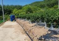 폭염·가뭄에도 자동관수관비장치 설치된 고추밭은 피해없어