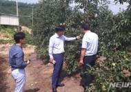 NH농협손보 전북, 가축·과수 폭염 피해 농가에 재해보험금 조기지급