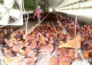 가축 508만마리 폐사·농작물 1965ha 말라…피해액 230억