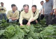 이개호 농식품부 장관, 강원 고랭지채소 재배단지 현장 점검