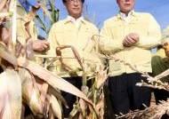생육 부진 옥수수 농가 살펴보는 이개호