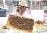 고교생들이 만든 꿀이 日전국콘테스트에서 최우수상
