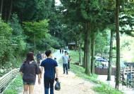 '피톤치드가 펑펑' 장성축령산서 9월15~16일 편백 산소축제