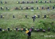 추석 앞두고 부산 영락공원묘지 벌초