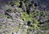 """지리산 구상나무 등 고산침엽수 집단고사…""""멸종위기종 보호해야"""""""