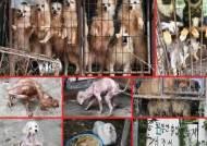 '애니멀호더' 내일부터 동물학대로 처벌…최대 2년 징역형