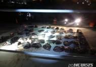울산해경, 불법 포획한 고래고기 운반선 적발