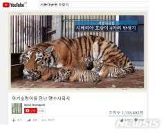 서울대공원, 멸종위기 시베리아 호랑이 영상 기록