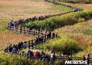 제20회 순천만 갈대축제 11월2~4일 열려