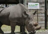 中, 멸종위기 호랑이·코뿔소 제품 '의료용 판매' 합법화