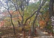 [뉴시스앵글]아름다운 숲 함양 상림에 찾아온 가을 편지~'단풍'